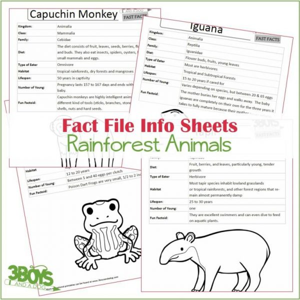 Rainforest Animals Fact Files
