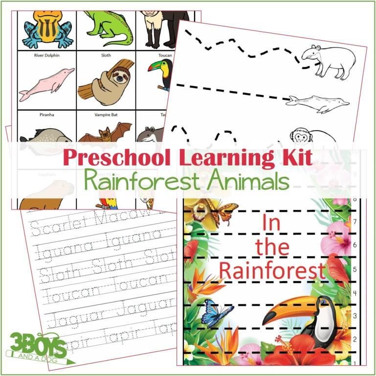 Rainforest Animals Learning Kit