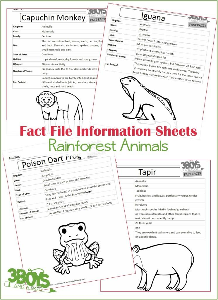 Fact File INfo Sheets about Rainforest Animals