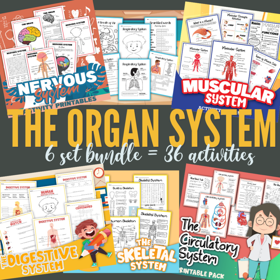 The Organ System Worksheet Bundle