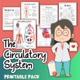 The Circulatory System